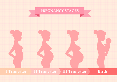 Vector illustration of pregnant female silhouettes. Changes in a woman body in pregnancy. Pregnancy stages, trimesters and birth, pregnant woman and baby. Infographic elements Ilustração