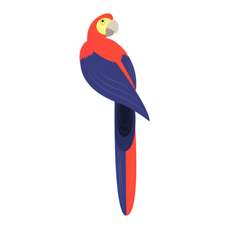 tropical birds: Tropical birds. Parrot. Colorful parrot on white background. Isolated vector illustration