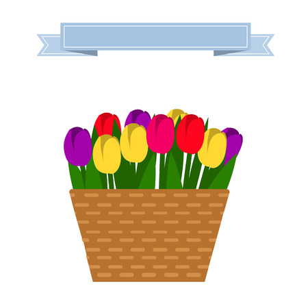 camomile flower: Vector set of multicolored tulips in beige basket. Wattled basket with beautiful flowers. Collection of spring and summer colorful flowers. Illustration
