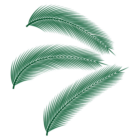 Tropical palm leaves on white background, vector illustration.