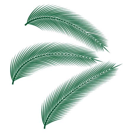 Tropische palmbladen op witte achtergrond, vectorillustratie.