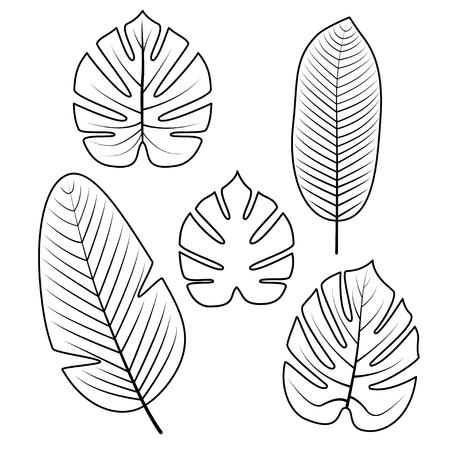 熱帯のヤシの葉で孤立した白い背景。アウトラインのベクター イラストです。ジャングルの葉。ぬりえ本、ポスター、招待状のイラストを使用しま