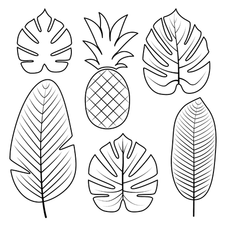 Tropical Palm leaves and pineapple isolated on white background. Outline vector illustration. Jungle leaves. Used illustration for coloring book, posters, invitations. Ilustração