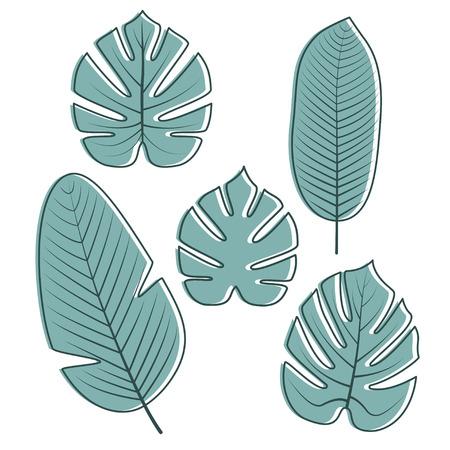 Tropische Palm, Philodendron, Banaanbladeren en geïsoleerd op witte achtergrond. Vector illustratie