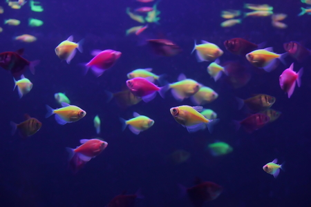 beautiful small fish in an aquarium texture background