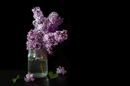 still life lilac branch in a glass jar on a black background isolate Stockfoto