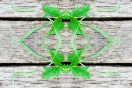grass geometry figure reflection shapes symbol logo on wooden boards. ecology, health, green energy concept. for designer, cover, web header page templates.