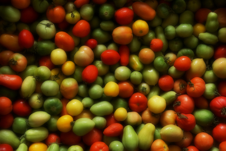 vegetable background. different maturity tomatoes red yellows green. multi-colored small tomatoes