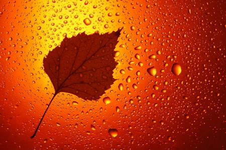 autumn background yellow orange birch leaves raindrops close up