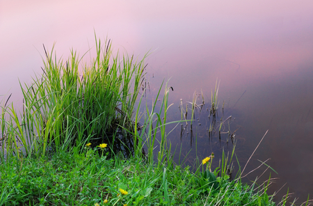 early morning lake water pink green grass near the shore passion for fishing close-up Banco de Imagens