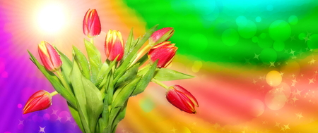 spring fresh. red tulips on a multicolored abstract background of spring sun rays. Beautiful closeup for celebration decoration design. Spring season.