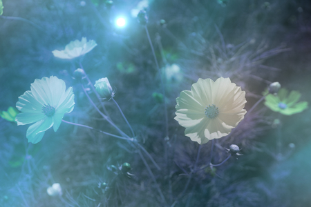 Floral moon background. white flowers light rays. Floral mo. Romantic concept. Beautiful blooming flowers. Love concept.