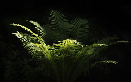 fern in the garden on a black background glows from the sun design book design website