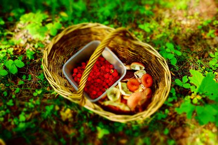 basket with mushrooms and berries in the forest