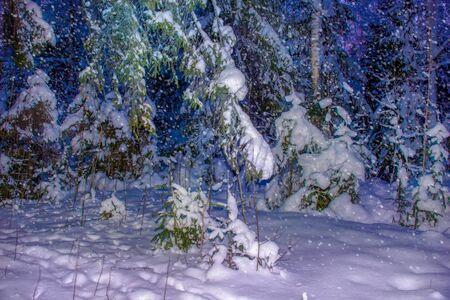 Christmas night landscape in the spruce forest. beautiful winter landscape falling snow Zdjęcie Seryjne