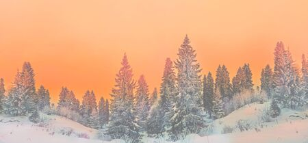Winter landscape snowy trees beautiful sunset fanciful frosty trees Christmas trees fairy atmosphere of the winter forest