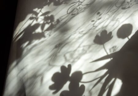 shadow on a sheet of white paper from flowers tulle curtains in the room in the morning sun light close up 版權商用圖片