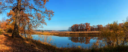 autumn morning in an oak grove. autumn landscape by the river panorama horizontally
