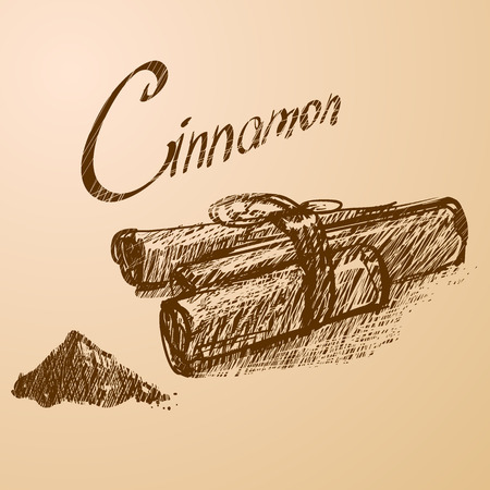 indian spices: Vector illustration. Cinnamon Illustration