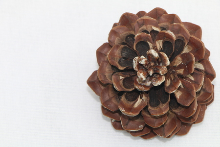 pinecone: A pinecone Stock Photo