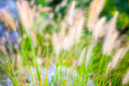 Plant Reeds in Green Nature