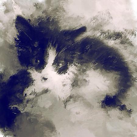 oil paint cat photo