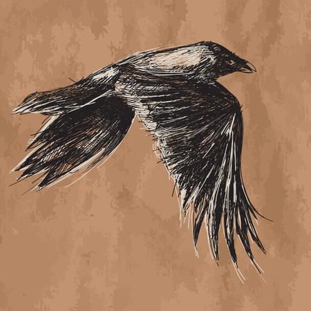 künstlerische Vektor-Zeichenprogramm fliegenden afrikanischen Krähe auf Handwerk