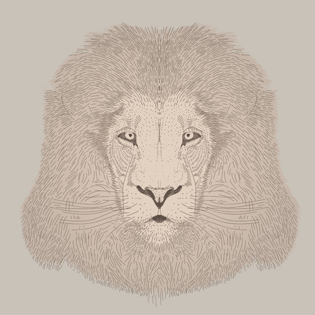 big head: engraving style vector hand drawing male lion head Illustration