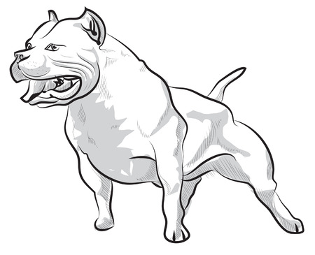 black and white pit bull: Vector sketch hand drawing illustration pitbull barking
