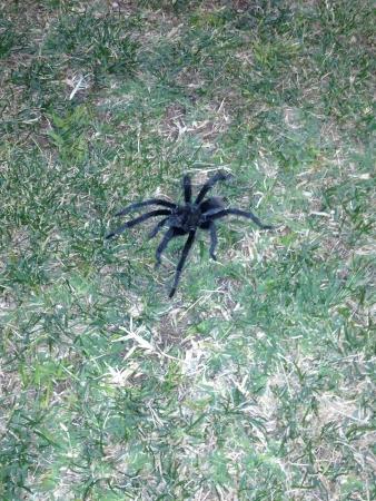 tarantula: just a tarantula chillin