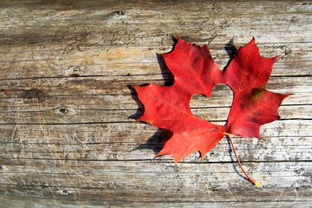 Maple-Leaf to cut the heart on the tree photo