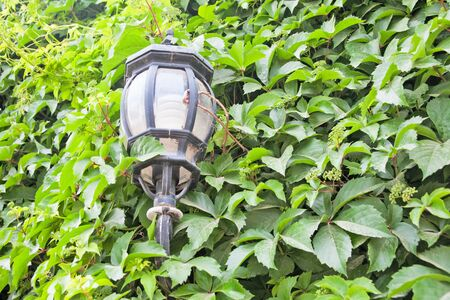 View of a green street lamp and a green leaf Stock Photo - 17698416