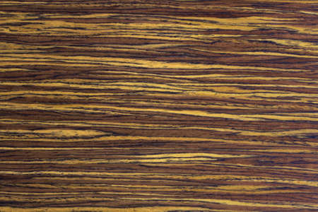 Wood Texture, WALNUT Stock Photo - 18235069