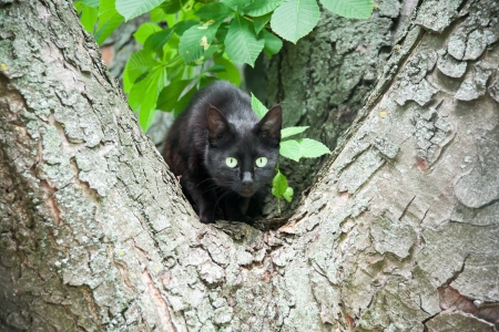 a black cat in a tree Stock Photo