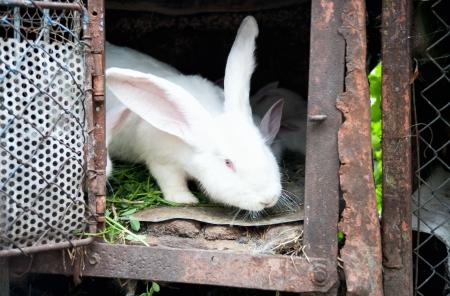 rabbit cage: un bianco soffice coniglietto in una gabbia