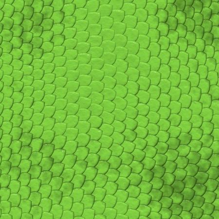 Iguana lizard skin pattern