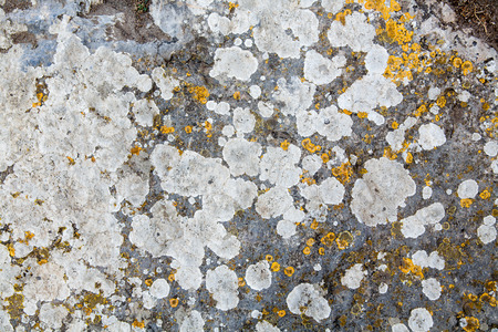 texture of stone covered with mold