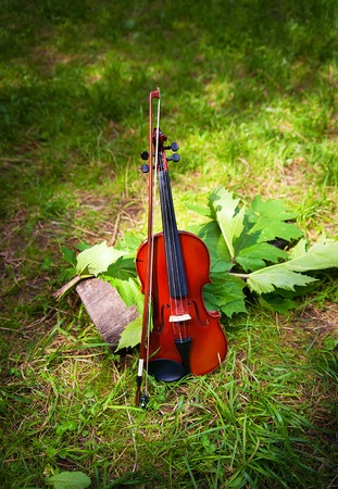 Violin on a grass and green leaves around. Stock Photo