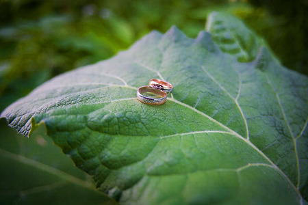 Two Golden wedding rings lie on leaves green plant