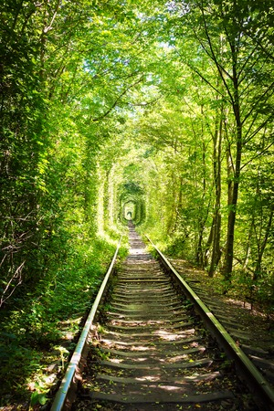 endlessness: Natural tunnel of love formed by trees in Ukraine, Klevan.
