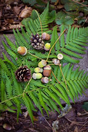 Autumn background of acorns, cones on the leaves of a fern