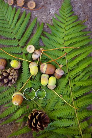 Autumn background for wedding rings - acorns, cones on the leaves of a fern