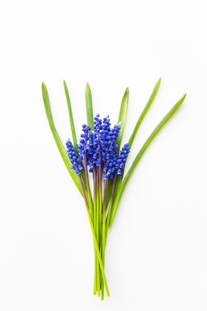 Beautiful composition - blue muscari lie on a white table. Stock Photo