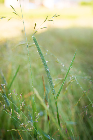 grass in a meadow in the mountains close up Stock Photo