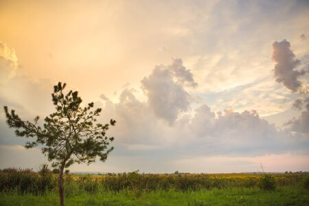 tree in a green field and big white clouds, summer sunset.