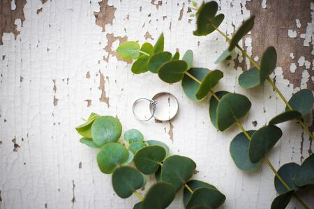 wedding rings on a white table with old eucalyptus twig, close-up