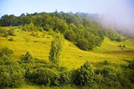 morning landscape with fog Carpathian Mountains in Ukraine. 版權商用圖片