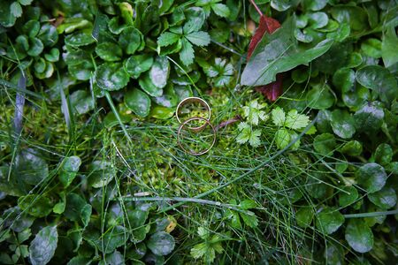 beautiful gold wedding ring in a green grass lawn
