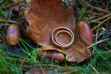 gold wedding rings lie on a leaf in the park