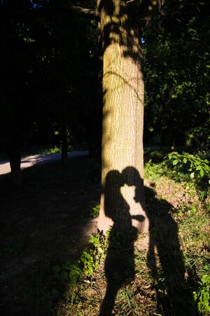 a shadow on the tree beautiful couple kissing